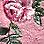 vieux rose